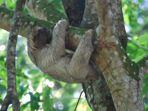 Turismo sostenible Costa Rica